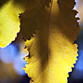 Colorful Autumn Leaf by Ray Laskowitz - Printscapes