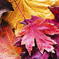 Colorful Autumn Leaves Closeup by Vishwanath Bhat