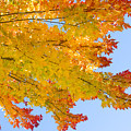 Colorful Autumn Reaching Out by James BO Insogna