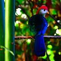 Colorful Bird Macau by Utpal Datta