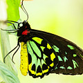 Colorful Bird Wing Butterfly by Sabrina L Ryan