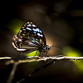 Colorful Butterfly On Twig by Jorgo Photography - Wall Art Gallery