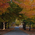 Colorful Byway by Robert Coffey