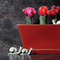 Colorful Cactus In Terracotta Pot by Milleflore Images