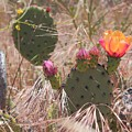 Colorful Cactus by Matthew Moore