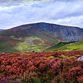 Colorful Carpet Of Wicklow Hills by Jenny Rainbow