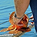 Colorful Catch by Diana Hatcher