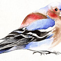 Colorful Chaffinch by Nancy Moniz