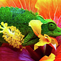 Colorful Chameleon by Christopher Johnson