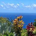 Colorful Coast by Nicole I Hamilton