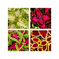 Colorful Coleus by Art Block Collections
