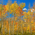 Colorful Colorado Autumn Landscape by James BO Insogna