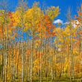 Colorful Colorado Autumn Landscape by James BO  Insogna