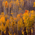 Colorful Colorado Autumn Landscape Vertical Image by James BO Insogna