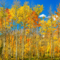 Colorful Colorado Fall Foliage by James BO  Insogna