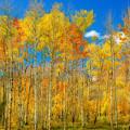Colorful Colorado Fall Foliage by James BO Insogna