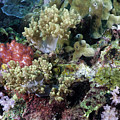 Colorful Coral Reef by Anthony Totah