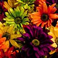 Colorful Daisies by Robin Lynne Schwind