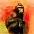 Colorful Expressions Black Monkey by Jai Johnson