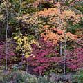 Colorful Fall Foliage by Rona Black