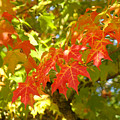 Colorful Fall Leaves Red Nature Landscape Baslee Troutman by Baslee Troutman