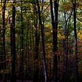 Colorful Fall Season by Robin Lynne Schwind