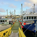 Colorful Fishing Boats In Bonavista Harbor by Les Palenik