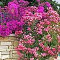 Colorful Flowering Shrubs by Sally Weigand
