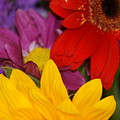 Colorful Flowers by Liz Vernand