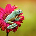 Colorful Frog by Fauzan Maududdin