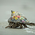 Colorful Hermit Crab by Chris Bordeleau