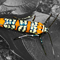 Colorful Insect - Ornate Bella Moth by Larry Jost