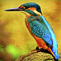 Colorful Kingfisher by Roy Pedersen