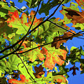 Colorful Leaves by Mike Cox