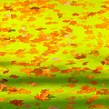 Colorful Leaves On Canal by David Letts