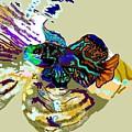Colorful Manderin Fish by Robert Rodriguez