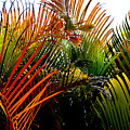 Colorful Palm Leaves by Reva Steenbergen