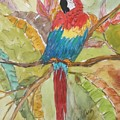 Colorful Parrot by Patricia Voelz