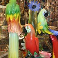 Colorful Parrots by Valia Bradshaw