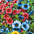 Colorful Petunias 2 by Claudia M Photography