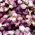 Colorful Pink Tasty Grapes In The Basket by Jeelan Clark