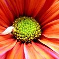 Colorful by Rhonda Barrett