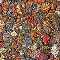 Colorful Rocks In Stream Bed Montana by Jennie Marie Schell