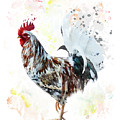 Colorful Rooster by Svetlana Foote