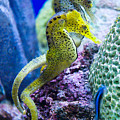 Colorful Seahorses by Jim And Emily Bush