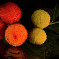 Colorful Seed Pods by Jean Noren