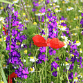 Colorful Spring Wild Flowers by Goce Risteski
