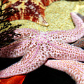 Colorful Starfish by Marilyn Hunt