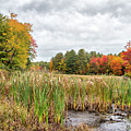 Colorful Webster Bog by Betty Pauwels