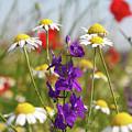 Colorful Wild Flowers Nature Scene by Goce Risteski
